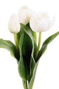 Bilde av Tulipan mix hvit