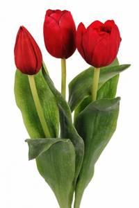 Bilde av Tulipan mix rød