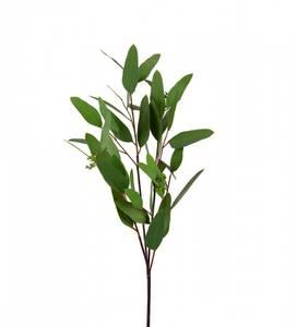 Bilde av Naturtro eucalyptus